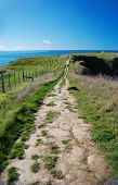Pathway on a cliff by the sea, Kaikoura Peninsula, New Zealand