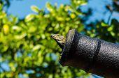 Un lagarto en un cañón