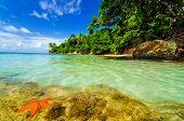 Estrellas de mar y la isla verde