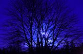 Another Blue Moon