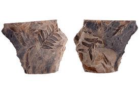 foto of paleozoic  - Fossil fern leaf on sandstone - JPG