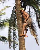 Palm Tree Climber
