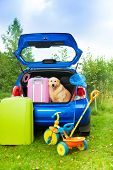Dog, Bags, Toys, Car Ready For Trip