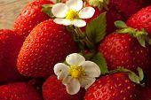 Strawberries Always Fresh And Healthy