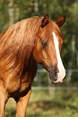 Portrait Of Gorgeous Arabian Horse