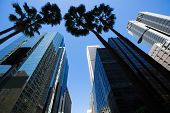 stock photo of blue angels  - LA Los Angeles downtown with palm trees details on cityscape - JPG