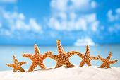 image of shells  - starfish  with ocean  - JPG