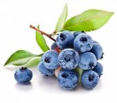 Blueberries with leaves on a white background. Studio isolated.