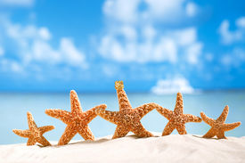 foto of starfish  - starfish  with ocean  - JPG