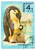 Stamp Printed By Russia, Shows Emperor Penguin And Chick