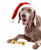 Santadog With Bone