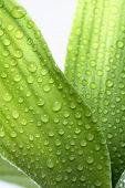 close up of green leaves with water droplets