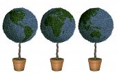 Topiary trees that look like globes