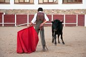 Young Bullfighter