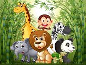 stock photo of pandas  - Illustration of a bamboo forest with many animals - JPG