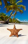 stock photo of starfish  - Starfish on tropical sea beach with palms Dominican Republic - JPG