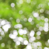 image of neon green  - photo of nature green bokeh abstract background - JPG