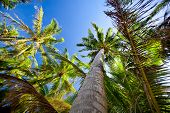 Top Of Palm Trees