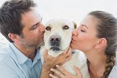 Happy couple kissing their yellow labrador on the couch at home in the living room