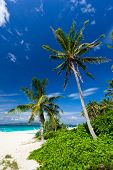 Tropical Scene, Philippines
