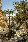 Oasis Chebika Sahara Desert, Tunisia, Africa