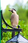 Jay On The Lamp
