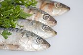 Fresh Sardines With Parsley Leaves