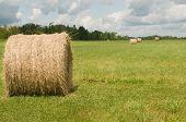 Summer hay bale