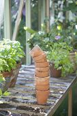 picture of workbench  - Stack of terracotta flowerpots on workbench in greenhouse - JPG