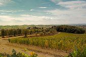 Field of a vineyard