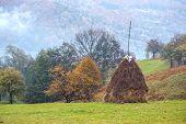 alone haystack near autumn forest