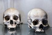 stock photo of catacombs  - Human skulls in the basement crypt. Soft focus