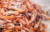 stock photo of saltwater fish  - fresh prawns and shrimps in the ice for sale in fish market in southern Italy - JPG