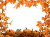 stock photo of fall leaves  - pumpkins on white background with fall leaves frame - JPG