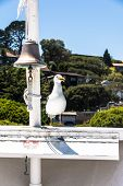 The seagull and the bell