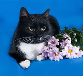 Black And White Cat Lying On Blue With Flowers
