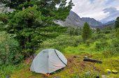 Camping Tent Under Siberian Pine