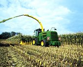 Corn crop for biogas energy