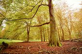 foto of glow-worm  - HDR shoot of a beech forest in autumn - JPG