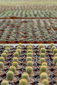 Cactus Plantation.