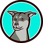 stock photo of cross-breeding  - Illustration of a Siberian Husky Chinese Shar Pei cross breed dog head set inside circle on white background done in cartoon style - JPG