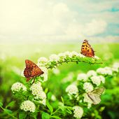 Flowers And Butterfly On Meadow
