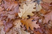 picture of fallen  - Fallen wet leaves on the ground - JPG
