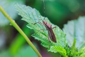 picture of insect  - insect on plant - JPG