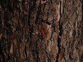 picture of chestnut horse  - horse chestnut tree bark - JPG