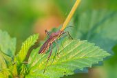 picture of insect  - insect on plant insect in nature background - JPG