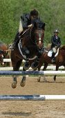 Jumper Horse