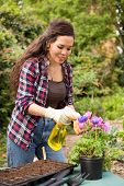 stock photo of pesticide  - young woman spraying pesticide on her flowers - JPG