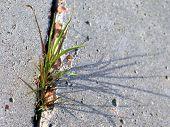Life Through Grass