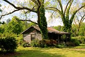 picture of fairyland  - a deserted cabin under bright spring sun - JPG